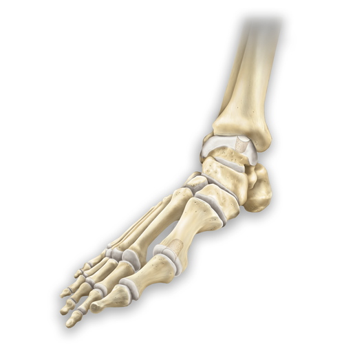 Medium ankle arthritis ocd osteochondritis dissecans 20180228 126908 502d3b20 fae8 41e1 9a73 5b8f51763e5a