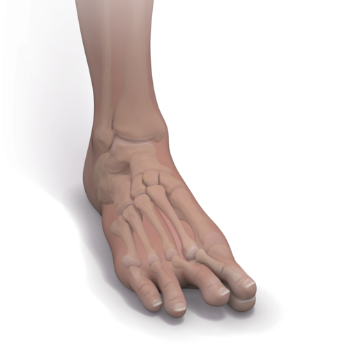 Medium foot instability toe dislocation illlt1 0458 en 46492326 46e3 40b3 92b2 56606e03b5c1