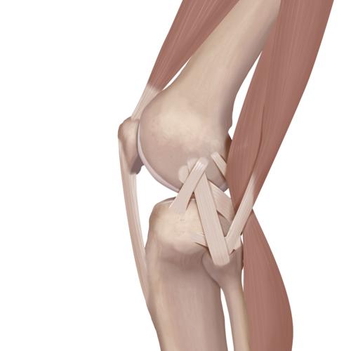 Medium knee tear lateral collateral ligament tear lcl illlt1 0112 en 72e009f9 bdb5 4e7a 851b 5f7105cd5572